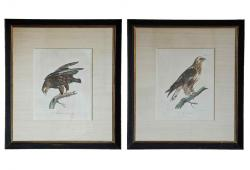 Pair of Framed Antique Hawk Engravings