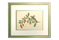 Vintage Wild Bird Engraving