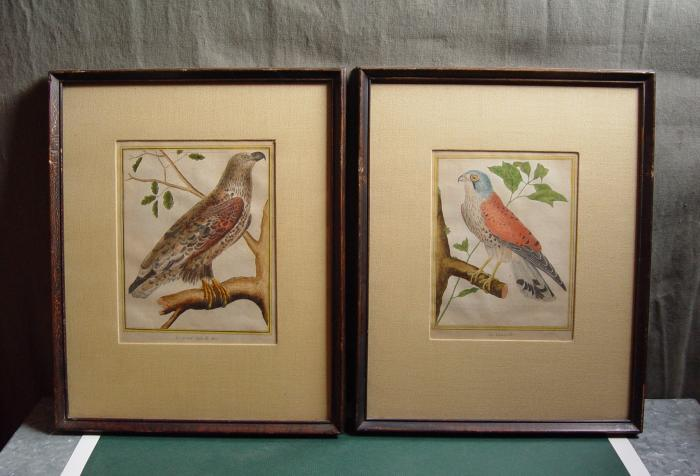 1786 French Bird Engravings, Pair